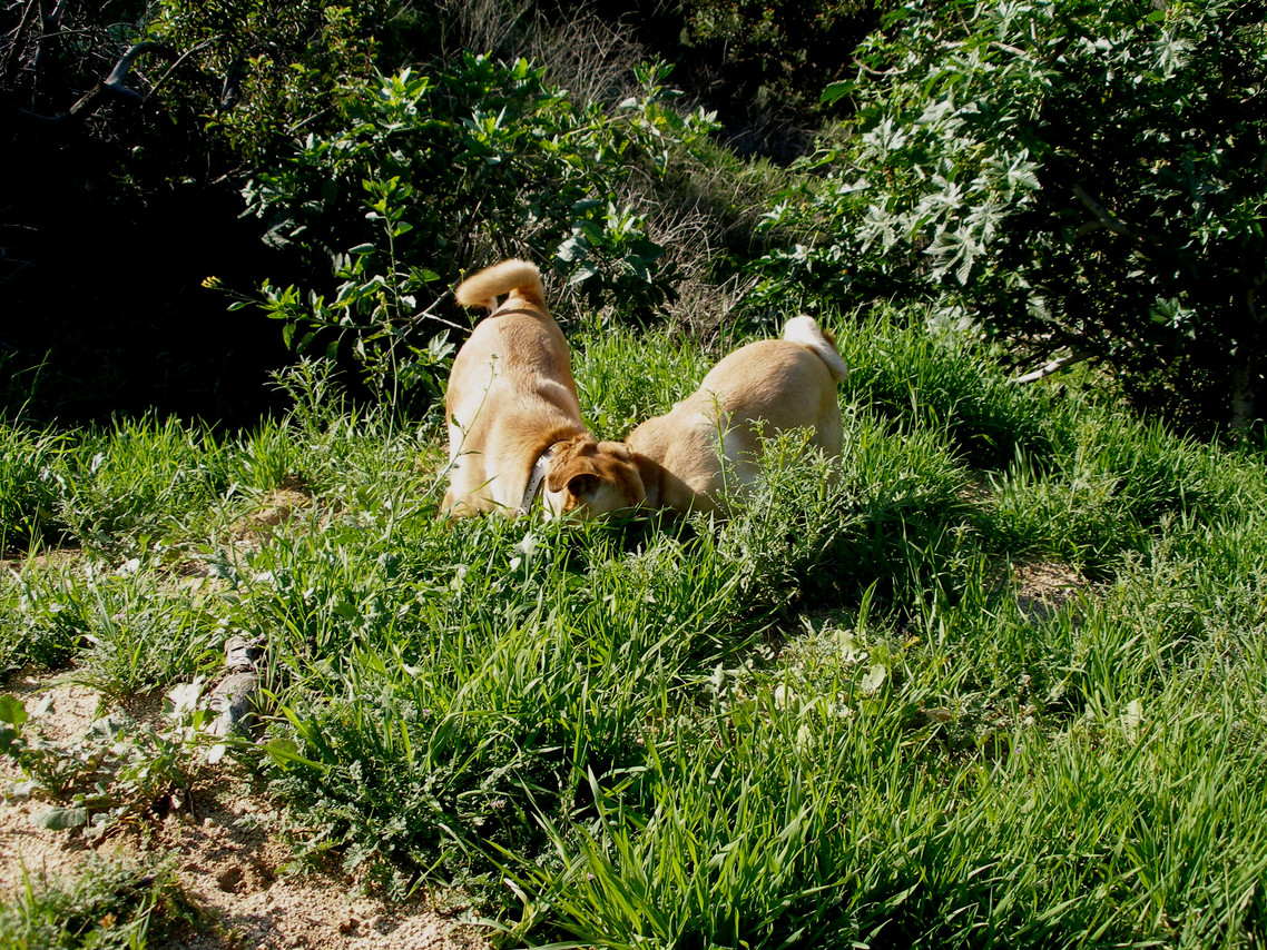 Dogs in the grass