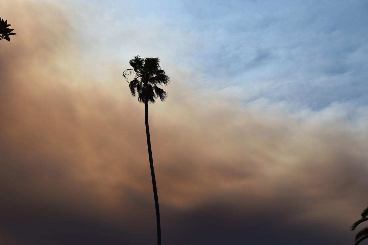 Palm tree in fire season