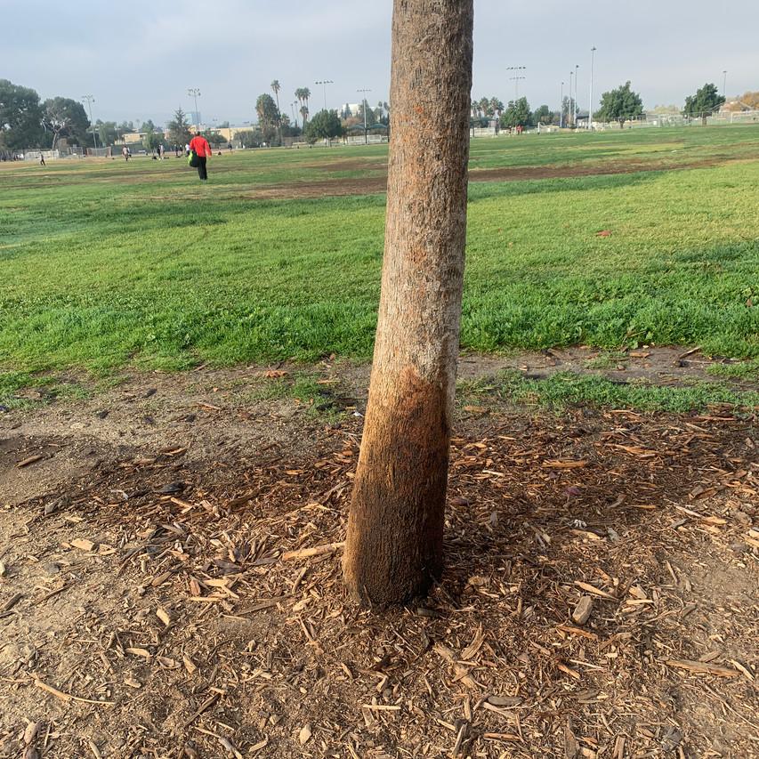 piss tree