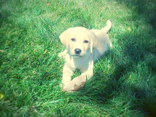 Easy ways to maintain a perfect lawn with dogs