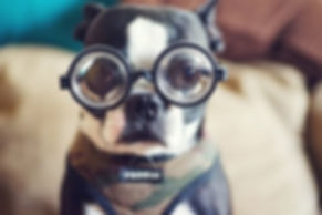 20-cute-dogs-with-glasses-006.jpg