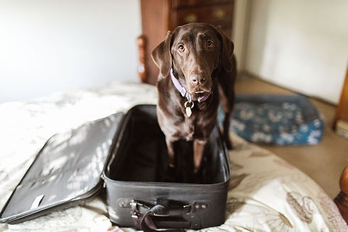 thanksgiving-dog-travel.jpg