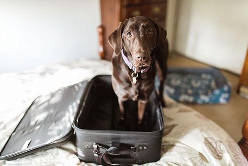 thanksgiving-dog-travel.jpg