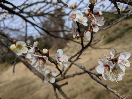 春が待ち遠しい