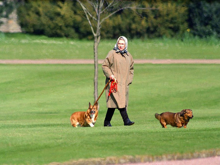 A Complete History Of The Queen's Corgis