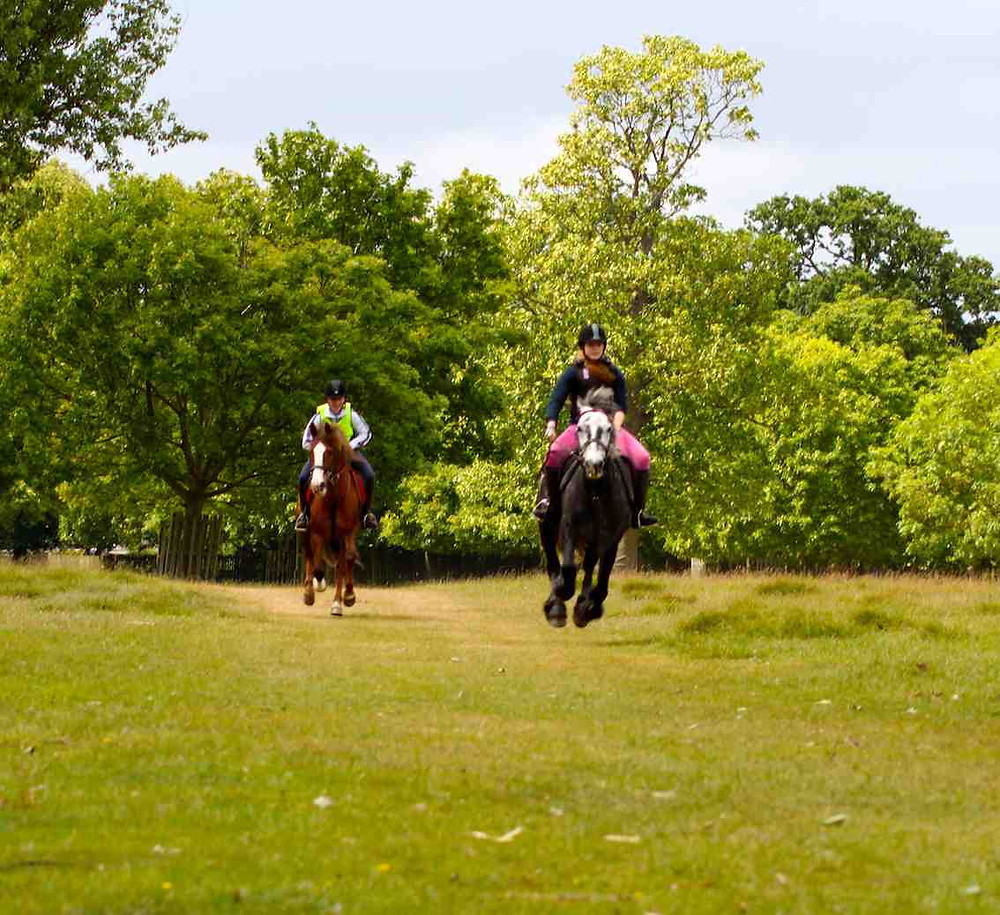 Canter lessons