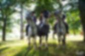 Horse Riding near Hampton Court