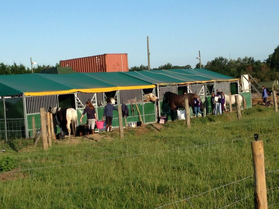 Park Lane Pony Camp 2014 Pachesham