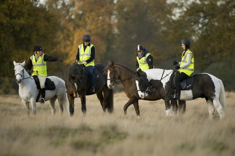 Horse Riding Lessons in Bushy Park