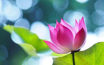 flor-lotus.jpg