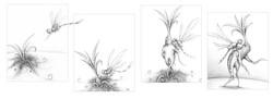 Dessin mandragore et libellule | Adrien Dusilence