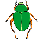 scarabeo.png
