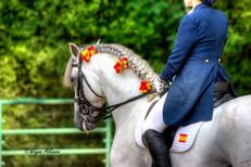 Pure Spanish Horse at WEC