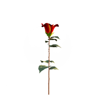Rose_4.png