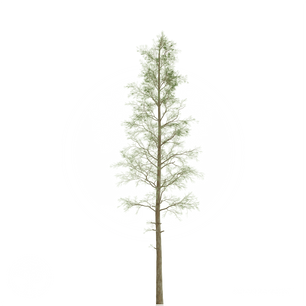 Pine_1.png