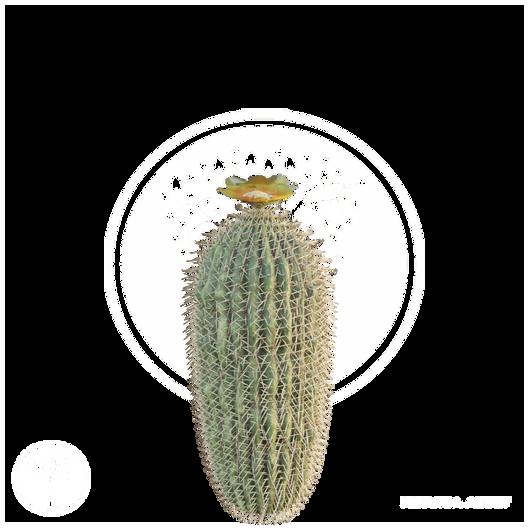 BarrelCactus_1.png