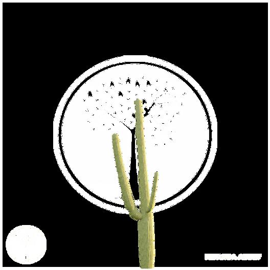Cactus_5.png