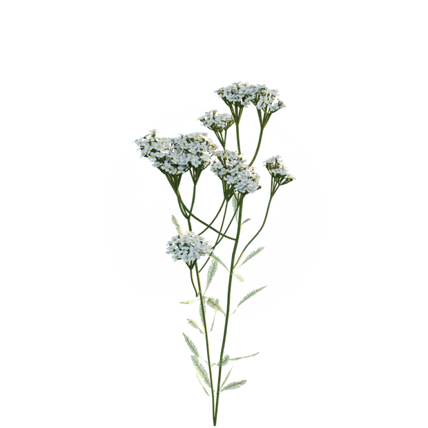 Common_Yarrow_flower.png