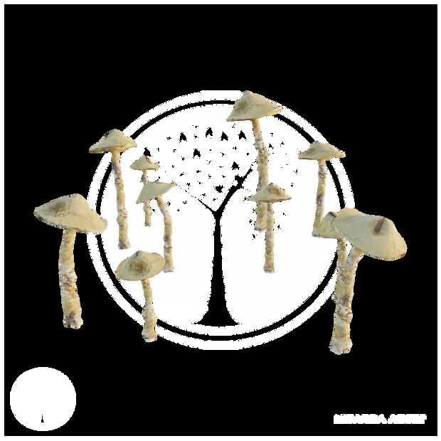 Common_Mushroom_1.png