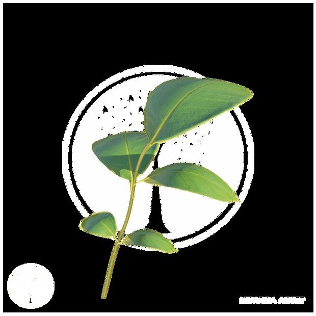 Vegetation9.png
