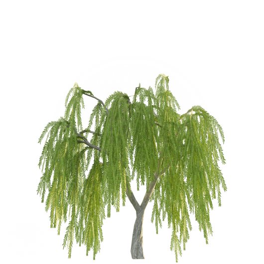 Willow_tree_1.png