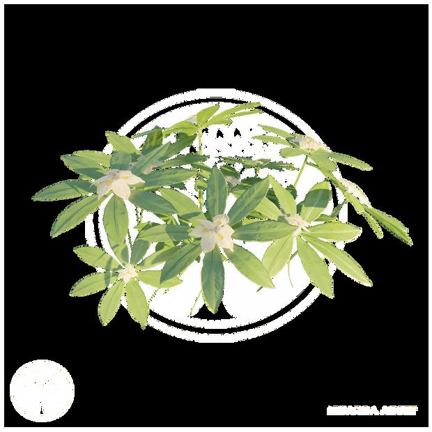 Vegetation4.png
