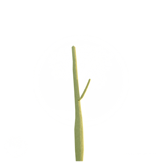 Cactus_1.png
