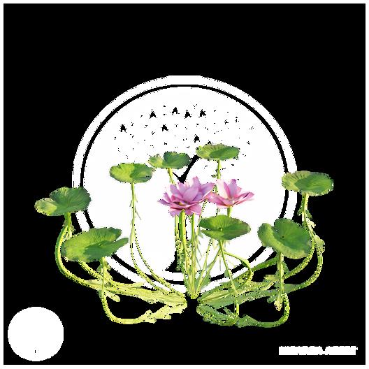 Lotus_Flower_2.png