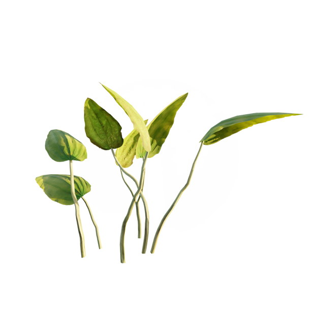 Sword_Plant_1.png