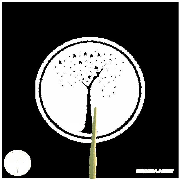 Cactus_4.png