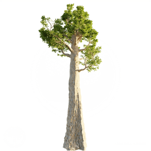 Giant_Redwood.png