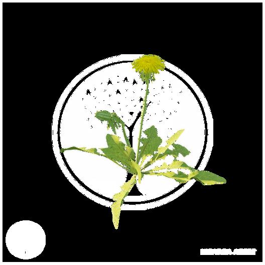 dandelion_3.png