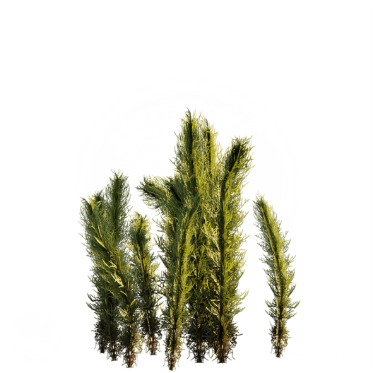Tumble_grass.png