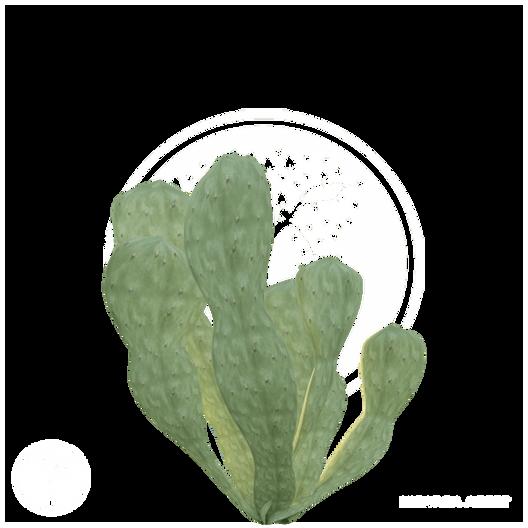 Cactus_8.png