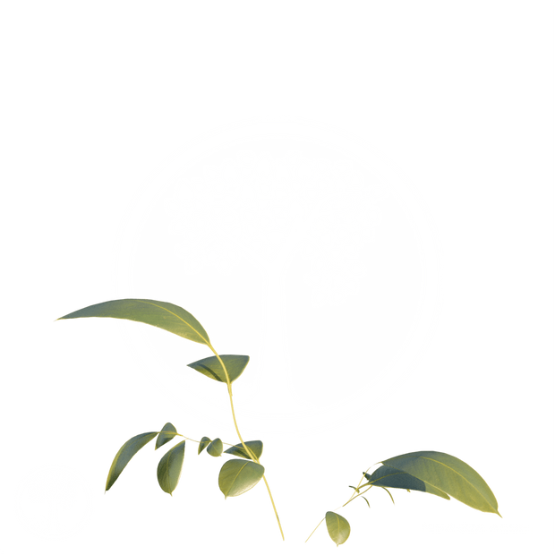 Vegetation11.png
