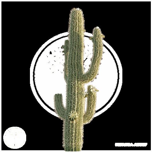Saguaro_Cactus_2.png