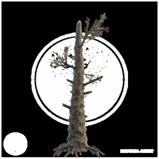 Burnt_Tree.png