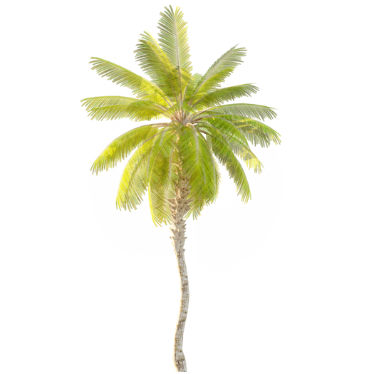 Date Palm_Tree_2.png