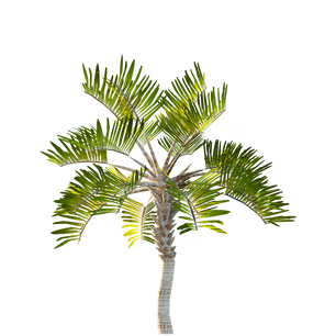 Curly_palm_2.png
