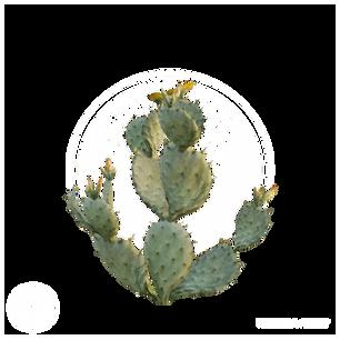 Prickly_Pear_Cactus_1.png