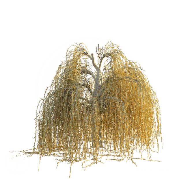 Weeping_Willow_Autumn.png