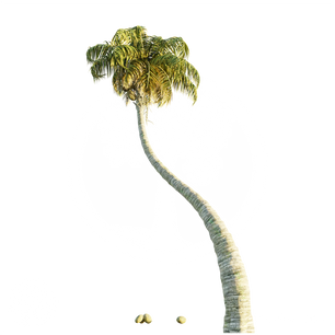 CoconutPalm_2.png