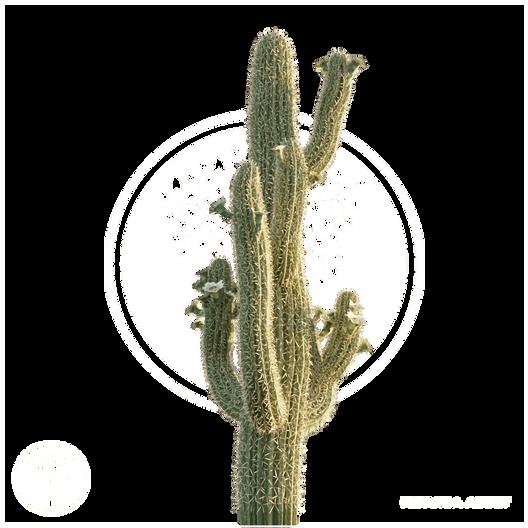 Saguaro_Cactus_1.png