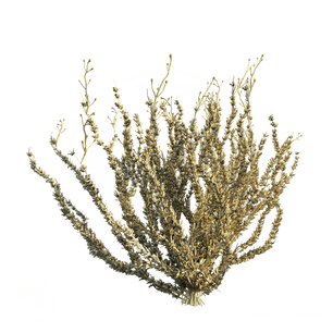 Sagebrush_Bush_1.png