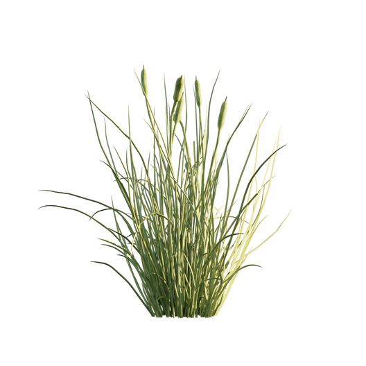 Cattail_1.png