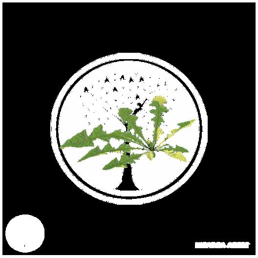 dandelion_1.png