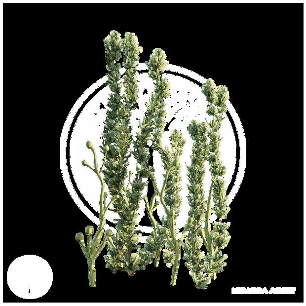 Pond_Weed_2.png