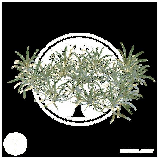 Grass_clump.png
