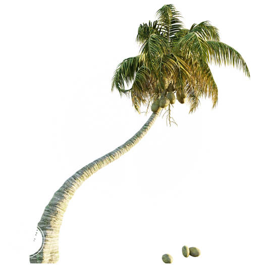 CoconutPalm_1.png