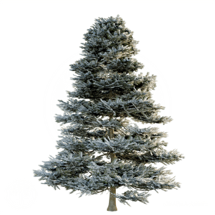 Pine_winter.png